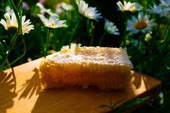 tła miodowy honeycombs obrazka biel Obraz Royalty Free