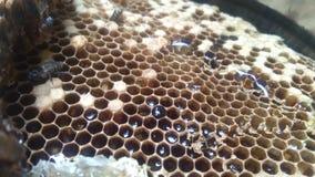 t?a miodowy honeycombs obrazka biel fotografia royalty free