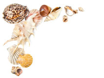 tła morza skorupy Fotografia Royalty Free