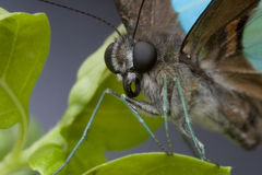tła motyla menchii purpury Obraz Royalty Free