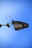 tła motyla niebo Zdjęcia Stock