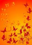 tła motyli florel ornament Zdjęcie Royalty Free