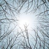 tła naturalna wektorów zima Ilustracja Wektor