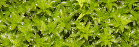 tła naturalny zielony Zdjęcie Stock