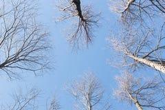 Tła niebieskie niebo w lasach i Zdjęcie Stock