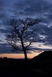 tła nocnego nieba drzewo Obraz Royalty Free