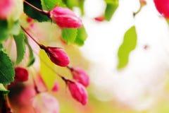 tło abstrakcjonistyczna wiosna Fotografia Stock