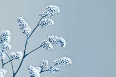 tło abstrakcjonistyczna zima Fotografia Royalty Free