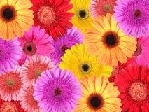 tło abstrakcjonistyczni kwiaty Obrazy Stock