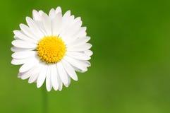tło abstrakcyjna daisy Fotografia Stock