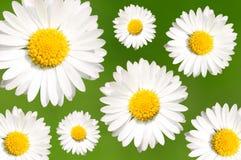tło abstrakcyjna daisy Obraz Stock