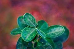 tło abstrakcyjna green Obrazy Royalty Free