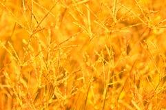 tło abstrakcyjna natura Fotografia Stock