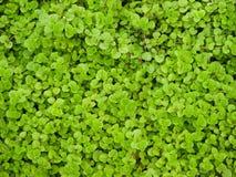 tło abstrakcyjna trawy. zdjęcie royalty free