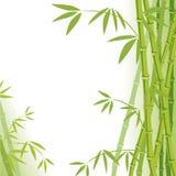 tło bambus ilustracja wektor