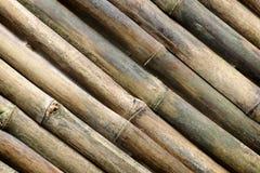 tło bambus Zdjęcie Royalty Free