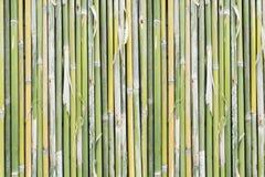 10 tło bambusowy eps ilustraci wektor obraz stock