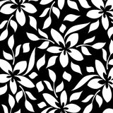 tło biel czarny kwiecisty Zdjęcia Stock