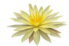 tło biel odosobniony lotosowy obrazy royalty free