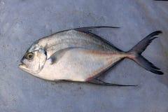 Tło denna ryba Zdjęcia Stock