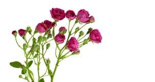 tło dnia st karciani valentines Zdjęcie Royalty Free