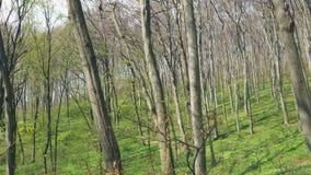 T?o drzewa w lasowej panoramie drzewa na szerokim k?cie obiektyw Lasowa halizna z zielon? traw?, i zbiory