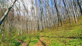 T?o drzewa w lasowej panoramie drzewa na szerokim k?cie obiektyw Lasowa halizna z zielon? traw?, i zbiory wideo
