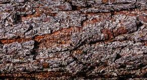 Tło Drzewna barkentyna Obrazy Royalty Free