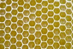 tło honeycombs Fotografia Royalty Free