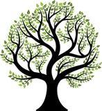 tło ilustracyjnego pojedynczy obrazu drzewny white wektor Fotografia Stock