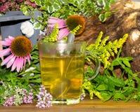 Tè o infusione dei echinaces e del solidago Immagini Stock