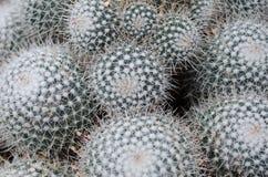 Tło kaktusa wzór Obraz Royalty Free