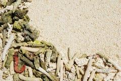 tło koral Zdjęcia Stock