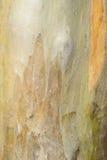 tło korowaty s zdjęcie royalty free
