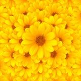 tło kwiat Fotografia Royalty Free