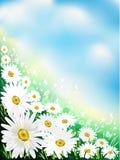 tło kwiat Zdjęcia Stock
