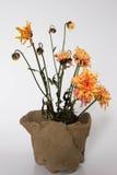 tło kwiat kwitnie rocznika Obrazy Royalty Free