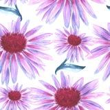 Tło kwiat menchie Chamomile bezszwowy wzoru Obrazy Stock