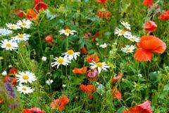 Tło kwiatu pole Obrazy Royalty Free