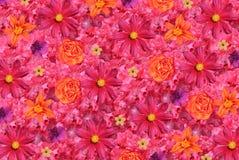 tło kwiaty Obraz Royalty Free