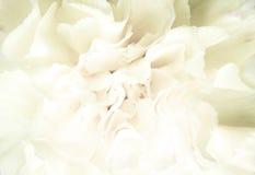 tło kwiecisty Fotografia Royalty Free