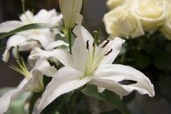 tło kwitnie leluja glansowanego biel dwa Obrazy Royalty Free