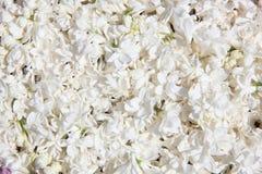 tło kwitnie lilego biel Obraz Stock