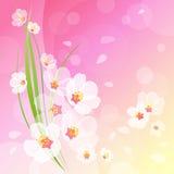 tło kwitnie wiosna Zdjęcia Royalty Free