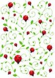 tło ladybirds Zdjęcia Royalty Free