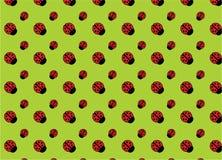 tło ladybirds Zdjęcia Stock