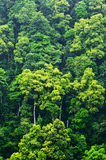 tło las Obrazy Royalty Free