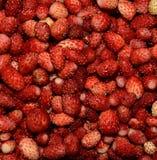 Tło lasowe jagod truskawki Fotografia Royalty Free
