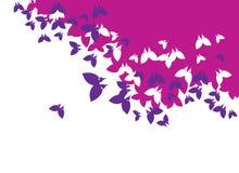 tło motyl Zdjęcia Royalty Free