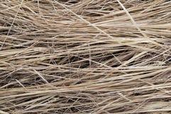 Tło mumiowata trawa Zdjęcia Royalty Free